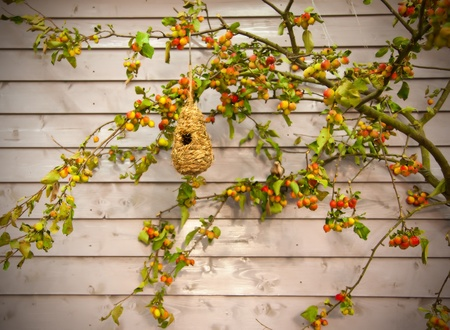 countrylife: autumn background with wooden wall and bird house Stock Photo