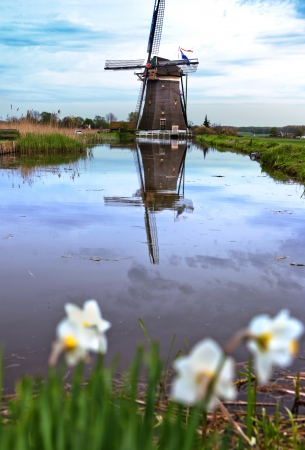 photo of  dutch spring country-side  with windmill photo