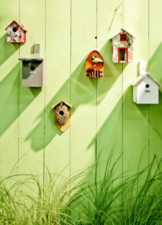 birdhouse: background from birds bos by spring wooden wall