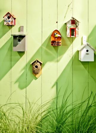 Hintergrund von Vögeln bos im Frühjahr Holzwand Standard-Bild - 13644819