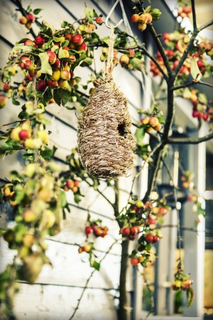 countrylife: seasonal background of autumn bird box