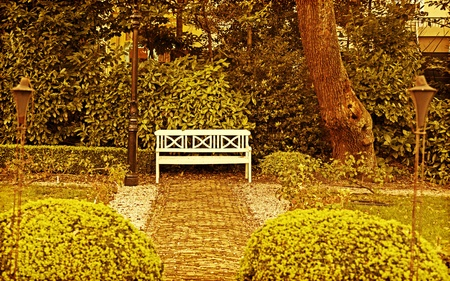 garden bench: background with nature of autumn time