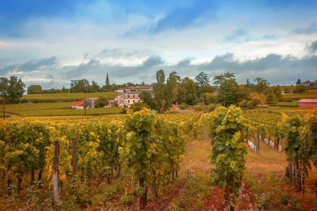 Wine landscape with old house in France photo