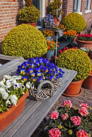 garden bench: spring flowers decoration by house