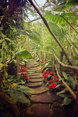 backgound des tropischen Waldes Standard-Bild