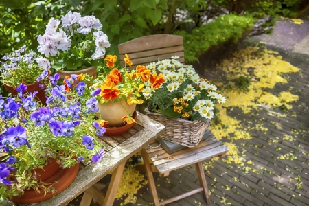seasonal image of summer flower garden