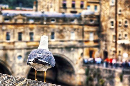 avon: seagull and panorama of  old  english town Stock Photo