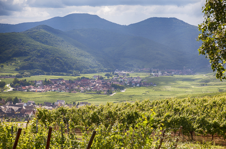 wine road: wine country side of Alsace region Stock Photo