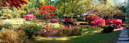 ponte giapponese: natura sfondo Panorama nel parco giapponese