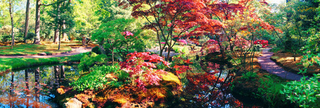 nature background panorama in Japanese park Foto de archivo