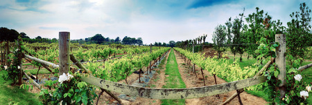 bodegas: winery panorama , farm on Jersey Island Foto de archivo