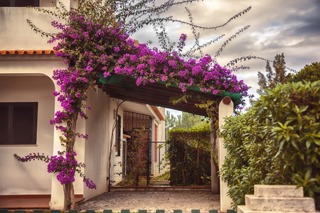autumn home plants and garden in Portugal Algarve