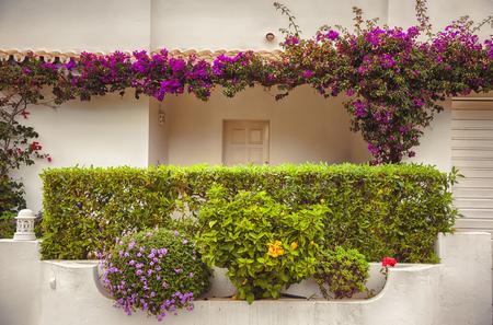autumn balcony garden in Portugal, Algarve