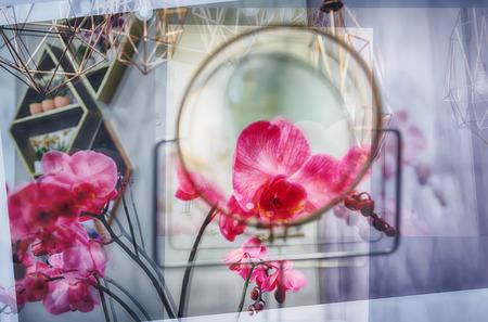 multiple exposure: multiple exposure of flowers, soft focus