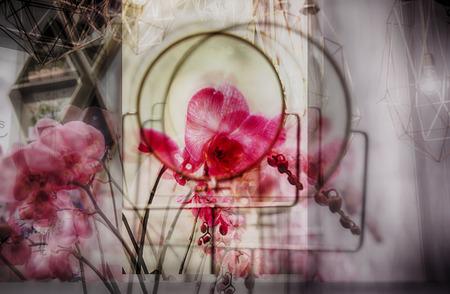 exposicion: exposición múltiple de flores, enfoque suave