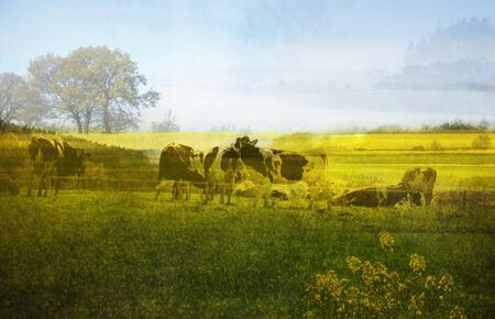multiple exposure: Belgian spring landscape, photo with multiple exposure Stock Photo