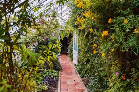 plantes finales de otoño en el interior de la casa verde
