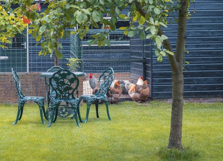 dutch: country life at dutch typical garden  , Giethoorn