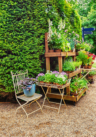 plant in pot: English flower shop in the park of Battle Abbey