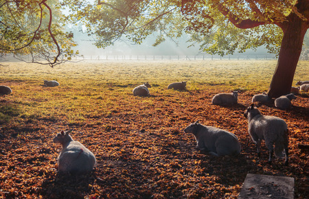 Dutch ecological farm, autumn morning