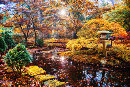 colorful autumn in Japanese park, the Hague