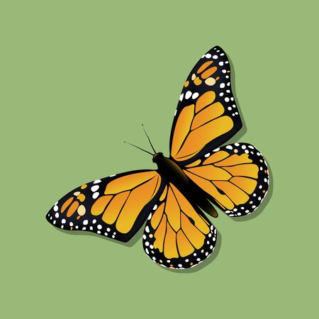 The Monarch butterfly (Danaus plexippus) in the family Nymphalidae. Vector illustration. Vetores