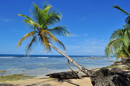 A lonely palm tree with beautiful blue sky background in The Caribbean Coast of Panama Stock Photo