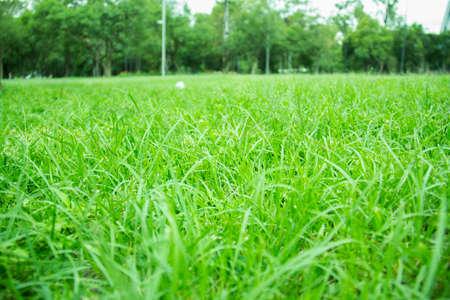 field meadow