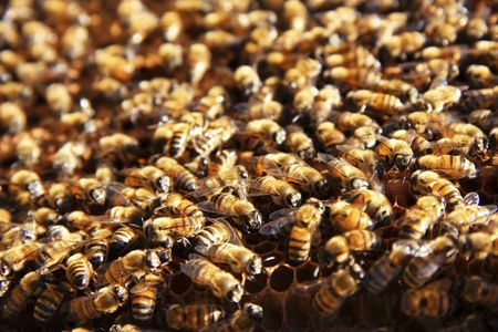Crowd Of Bees On Beehive Stock Photo