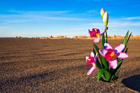 A hopeful flower in a desert