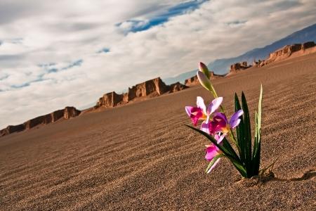 Ein hoffnungsvoller Blume in der Wüste
