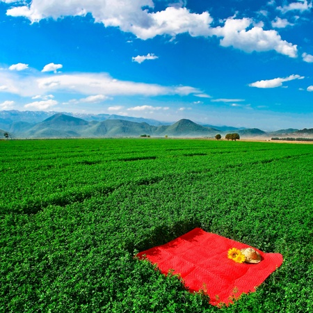 Carpet in farm