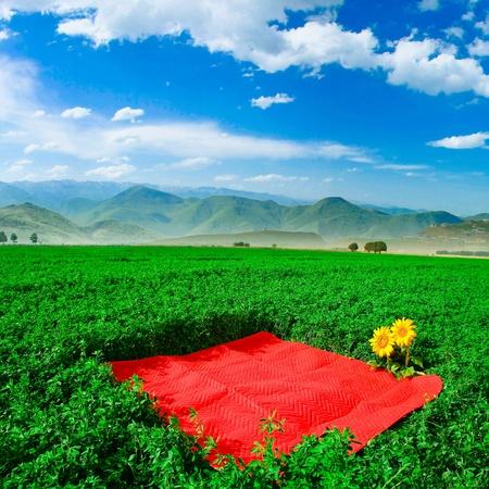 Carpet in farm