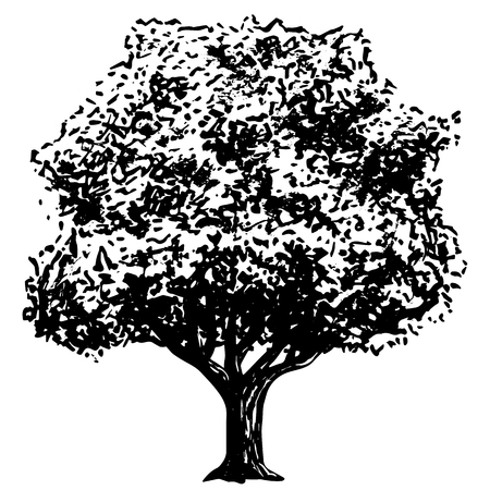 tree isolated: Vector Ink Drawing Of Tree Isolated On White Background