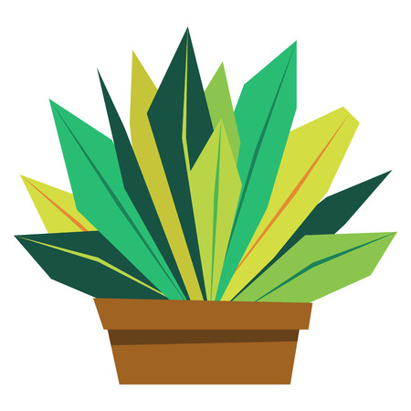 Vector Cartoon Bonsai Isolated On White Background