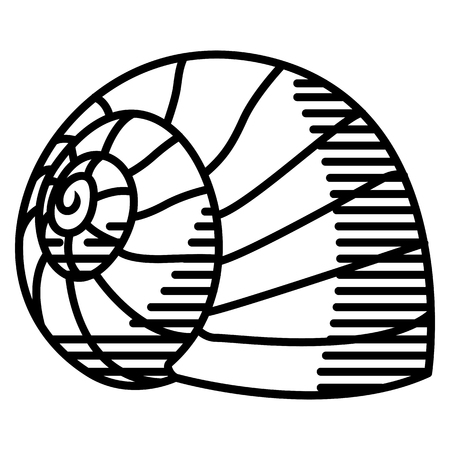 Vector snail shell isolated on white background