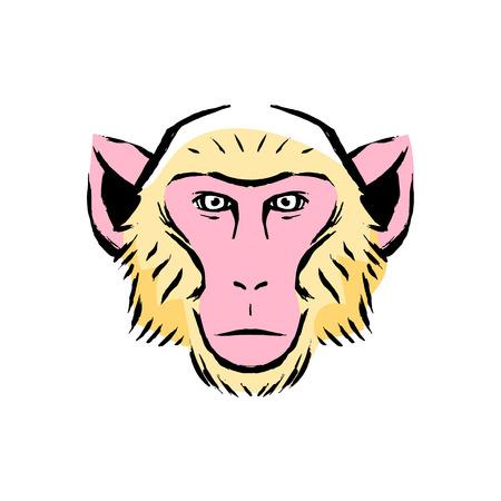 Vector Monkey Illustration Isolated On White Background