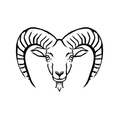 Vector Mouflon Illustration Isolated On White Background