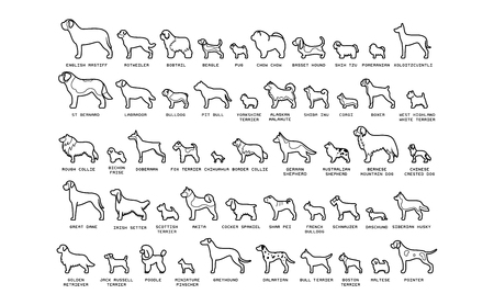 Vector Set Of Cartoon Dogs Isolated On White Background Illustration