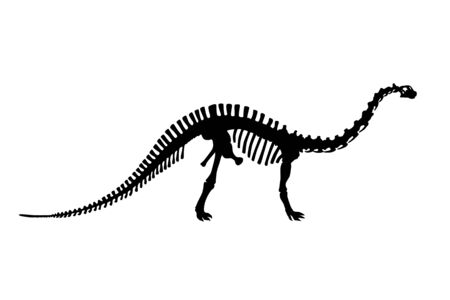 Vector Dinosaur Brontosaurus Skeleton Silhouette Illustration Isolated