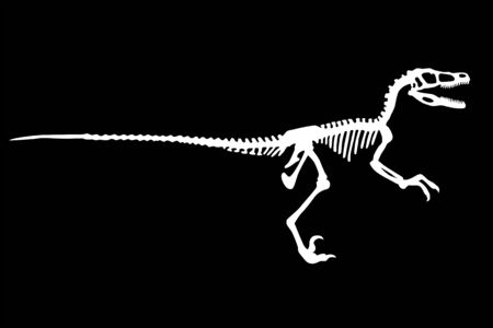 Vector Dinosaur Velociraptor Skeleton Silhouette Illustration Isolated