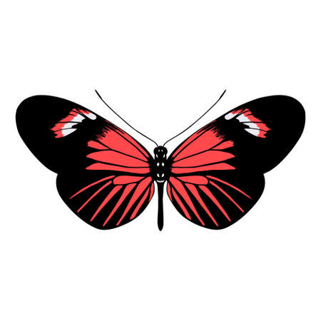 Isolated colored butterfly. Beautiful insect - Vector illustration