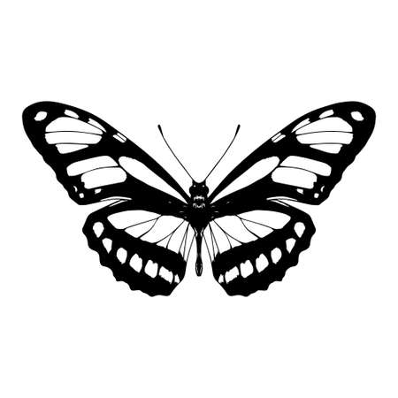 Isolated silhouette of a butterfly - Vector illustration