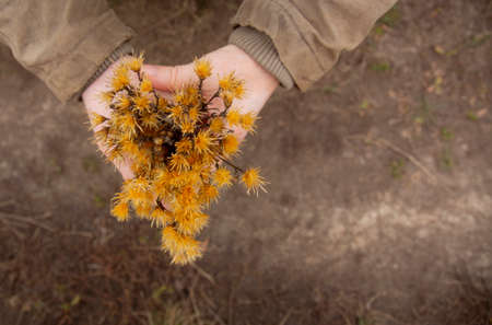 Man in brown coat holds in hands dried autumn flowers .