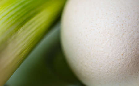 Abstract background with leek and egg macro shot Stock Photo
