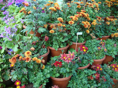 different color beautiful flowers in pot