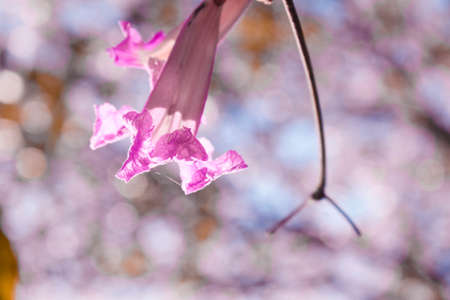 Pink Desert willow flower in focus with green leaves all around and blue sky