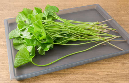 aquatic herb: Vegetable and Herb, Fresh Medicinal Centella Asiatica, Asiatic Pennywort, Thankuni or Gotu Kola Plant Herb Alternative Medicine for Arthritis and Juice.