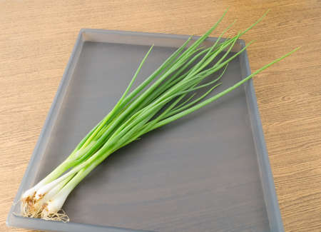 scallion: Vegetable and Herb, Bunch of Fresh Spring Onion or Scallion for Seasoning in Cooking on A Tray.