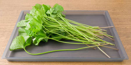 aquatic herb: Vegetable and Herb, Fresh Green Medicinal Centella Asiatica, Asiatic Pennywort, Thankuni or Gotu Kola Plant Herb Alternative Medicine for Arthritis and Juice. Stock Photo